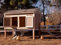 chicken coop24