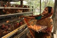 Apprehend lots of concerning the Chicken farming in India