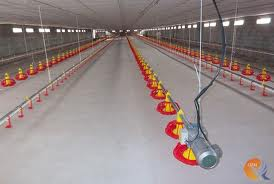types of best/ideal poultry feeding systems and Top suppliers