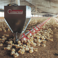 types of best/ideal poultry feeding systems and Top