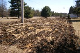it is the most effective ingredients of among all animal wastages as a measure to soil amendment and plant nutrient however excessive amount of manure for - Chicken Manure