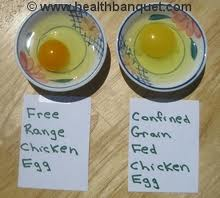 free range chicken egg