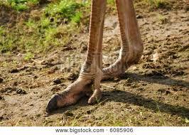 ostrich  legs1
