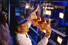 10 Guiding Principles To Optimize Poultry Processing