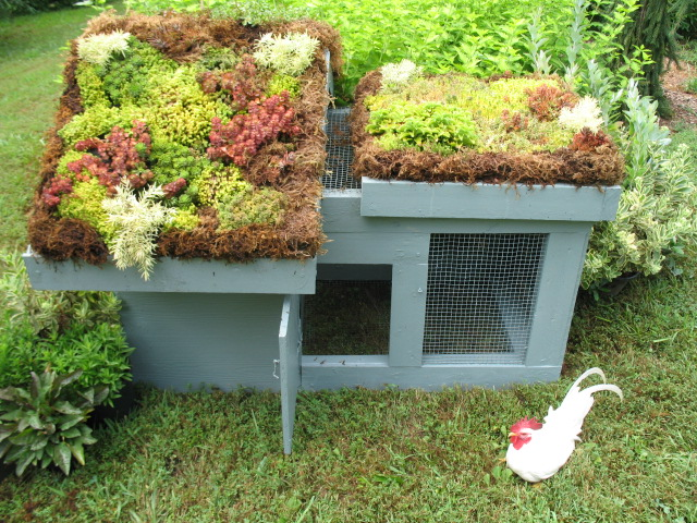 green roof chicken