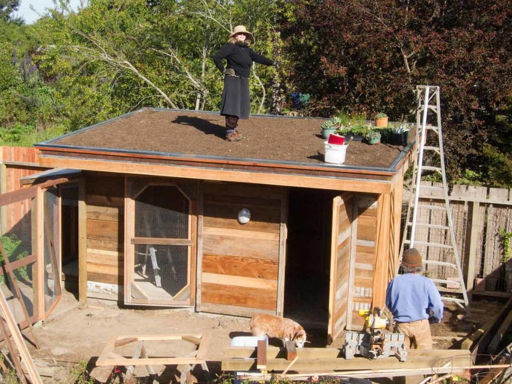 building a green roof chicken coop