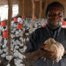 poultry farming in deveoping countries1