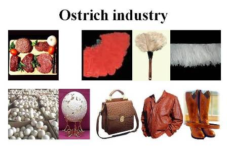 ostrich products