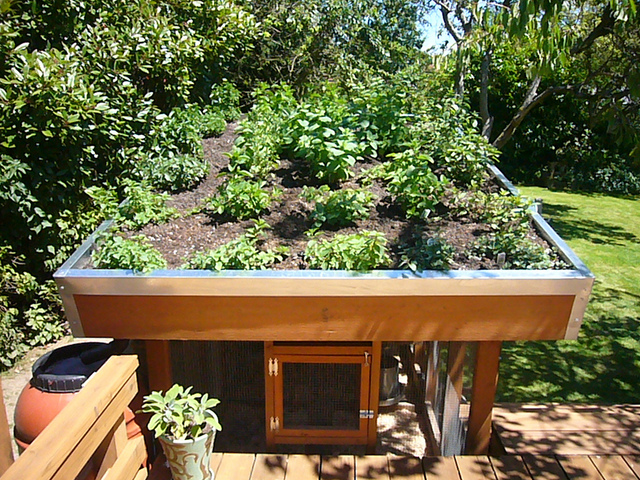 Free green roof chicken coop plans the poultry guide Make your own hen house