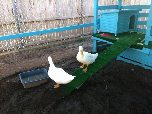 10 diy chicken feeder and waterer plans and ideas the for Chicken and duck coop