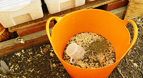 home made chicken feed