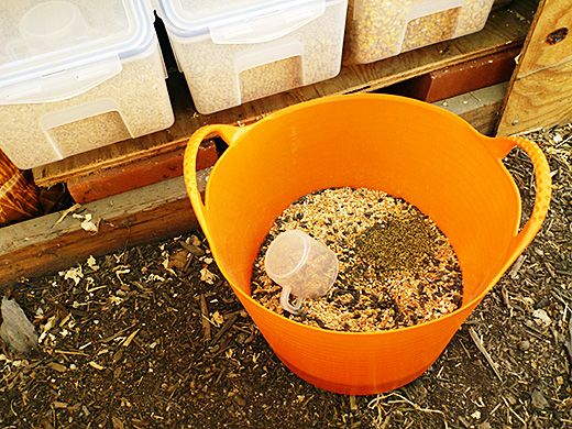 Homemade chicken feed-The ingredients to add in your Diy poultry feed