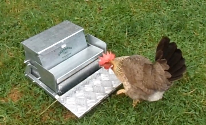 diy chicken feed and waterer1