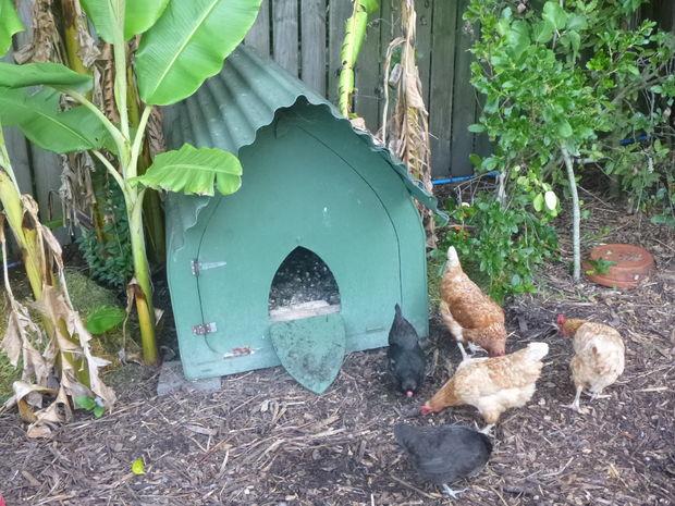 Gothic Chicken Ark