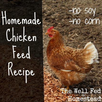a-soy-and-corn-free-chicken-feed-formula