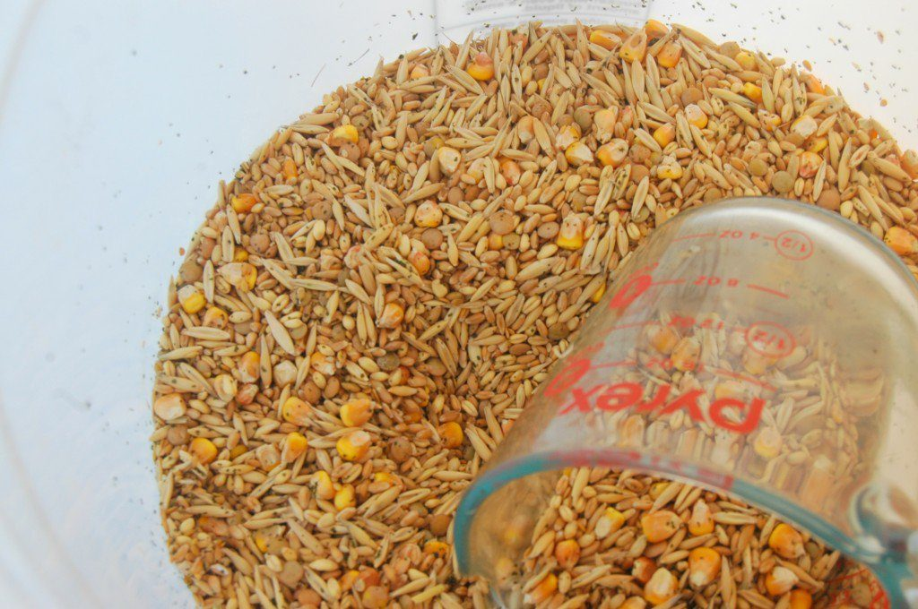 bulk-bought-organic-grain-mix-for-chickens