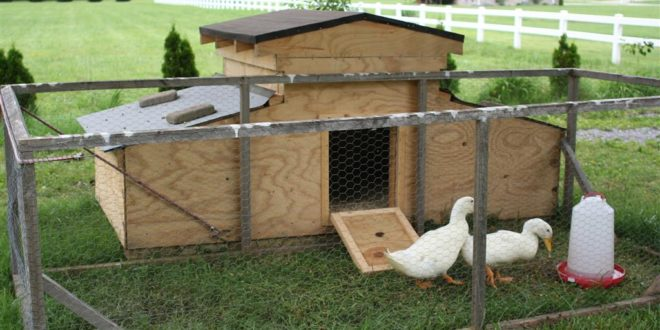 10 duck house plans you can build this weekend | the poultry guide